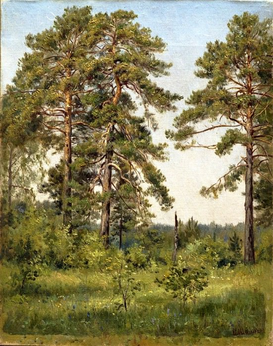Edge of pine forest. Ivan Ivanovich Shishkin