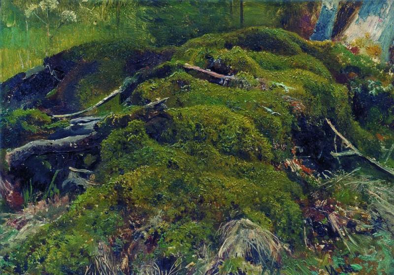 Moss. Roots. Etude 26h36. Ivan Ivanovich Shishkin
