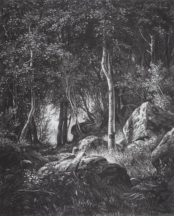 On the edge of a birch grove. Valaam Island. 1859-1860 44, 4h37, 5. Ivan Ivanovich Shishkin