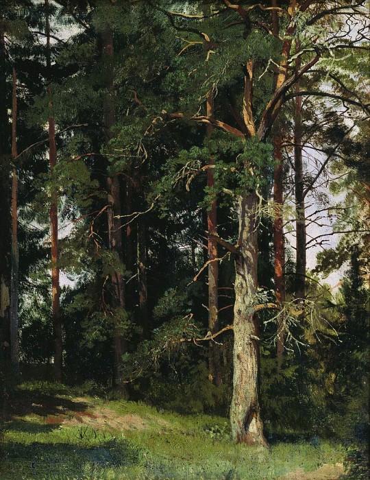 Forest 1880 38h30. Ivan Ivanovich Shishkin