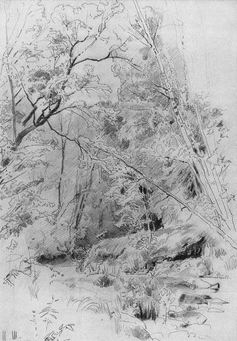 Над водой. 1880-е 39, 4х27. Иван Иванович Шишкин