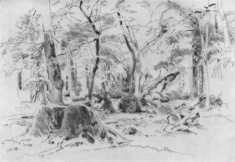 Спиленное дерево 1870-е 23х32. Иван Иванович Шишкин