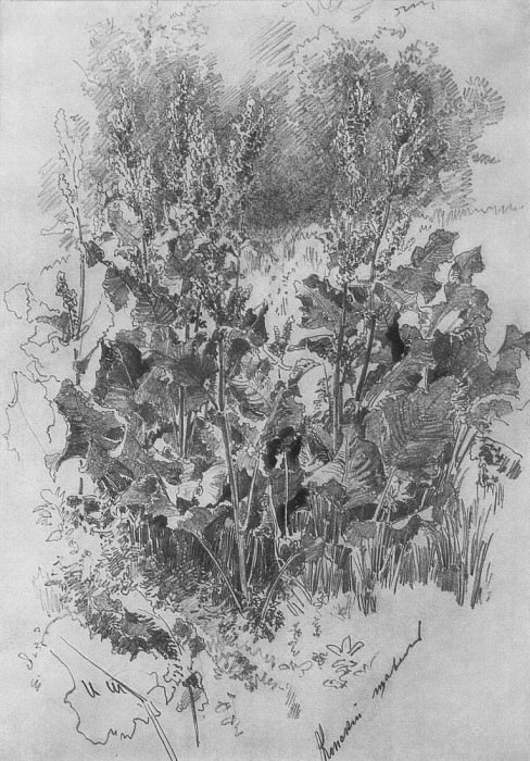 Horse sorrel. 1870 32, 4h22, 7. Ivan Ivanovich Shishkin