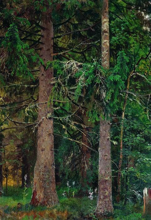 spruce forest. Etude 1889-1890 55h40. Ivan Ivanovich Shishkin