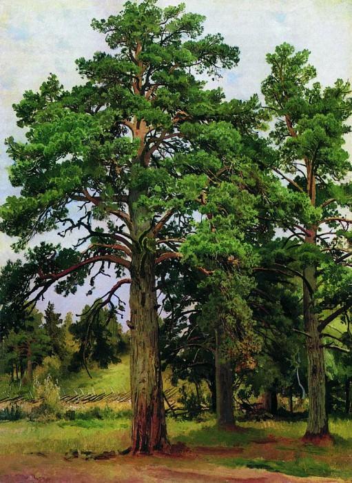 Pine sunless 1890 57h43. Ivan Ivanovich Shishkin