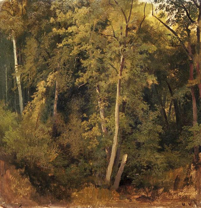 Forest landscape. Etude. Ivan Ivanovich Shishkin