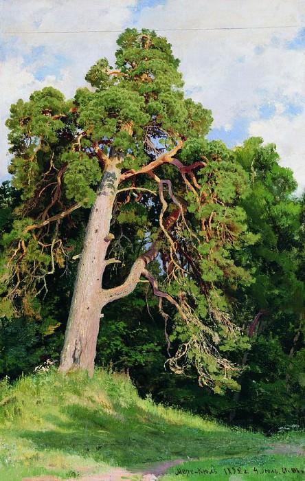 Pine. 1892. Ivan Ivanovich Shishkin