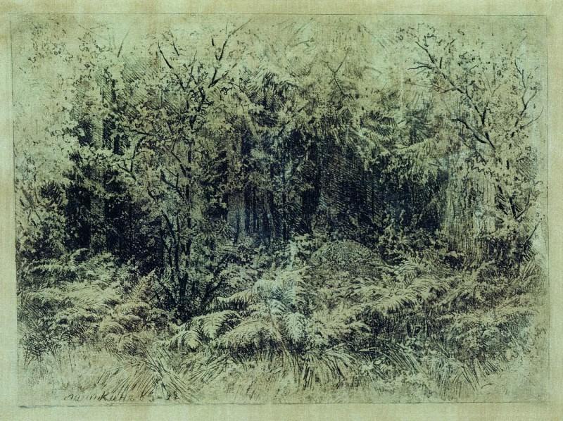 ant. 1892 18x24, 5. Ivan Ivanovich Shishkin