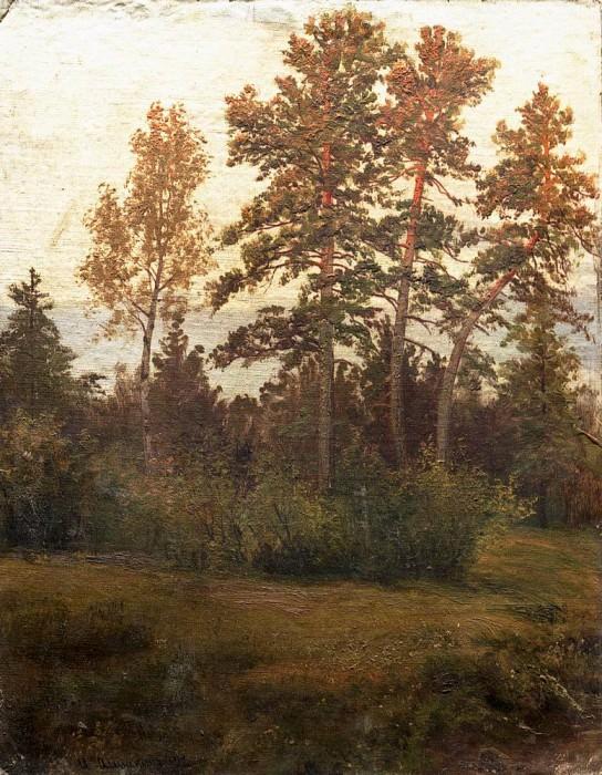 Edge of the Forest 1892. Ivan Ivanovich Shishkin