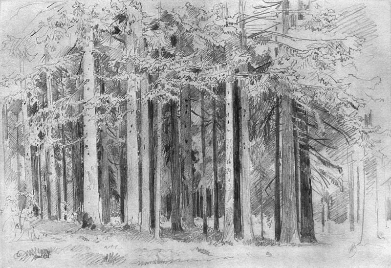Forest 1880, 31, 2h47. Ivan Ivanovich Shishkin