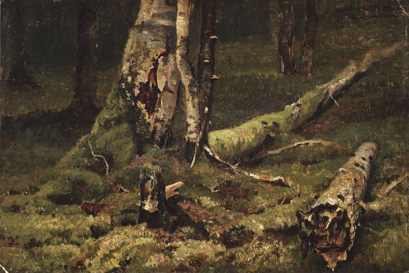Deadwood. Bialowieza Forest. 1892 28, 4h43, 4. Ivan Ivanovich Shishkin