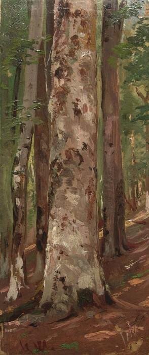 Forest. Etude. Ivan Ivanovich Shishkin