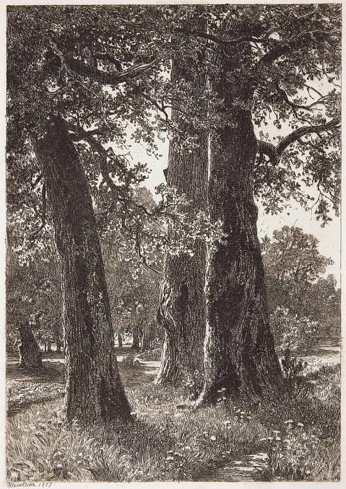 Three oak. 1887, 22 5x15, 8. Ivan Ivanovich Shishkin