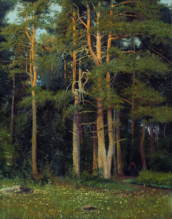 Pine Forest in Ligovo 1895 106, 4h73. Ivan Ivanovich Shishkin