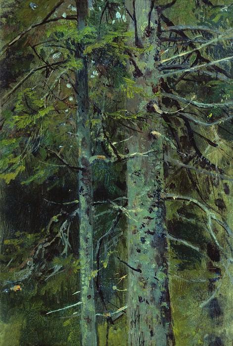 Forest. Etude 26h28. Ivan Ivanovich Shishkin