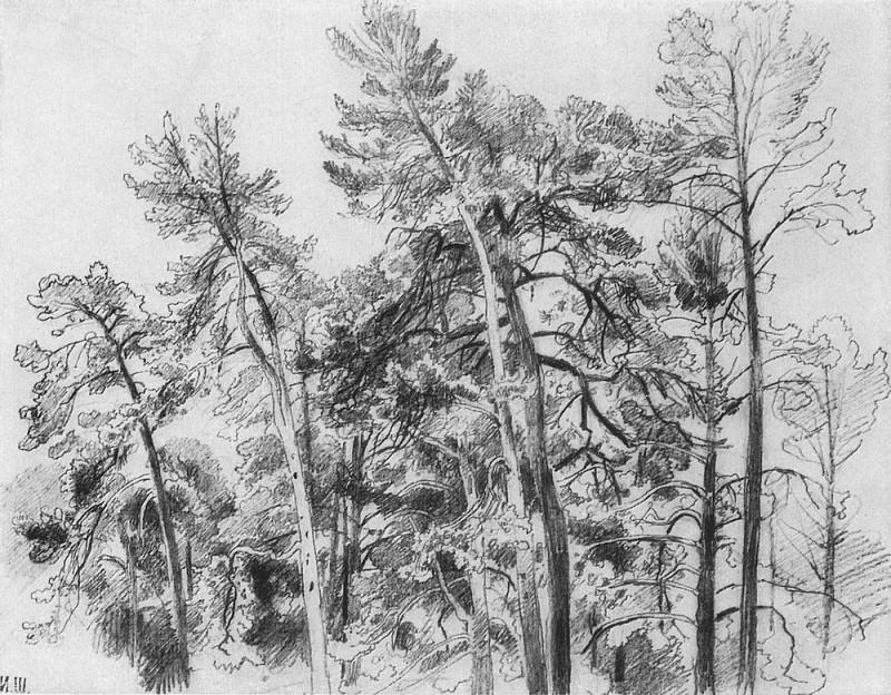 Вершины сосен 1890-е 32. 7х41. 8. Иван Иванович Шишкин