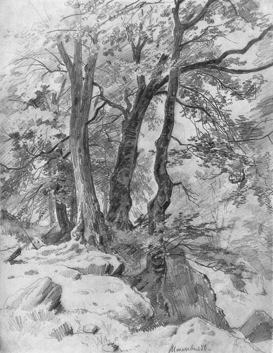 In the woods 1886 47h32. 8. Ivan Ivanovich Shishkin