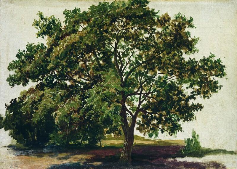 oak. 1889. Etude 35h48. Ivan Ivanovich Shishkin