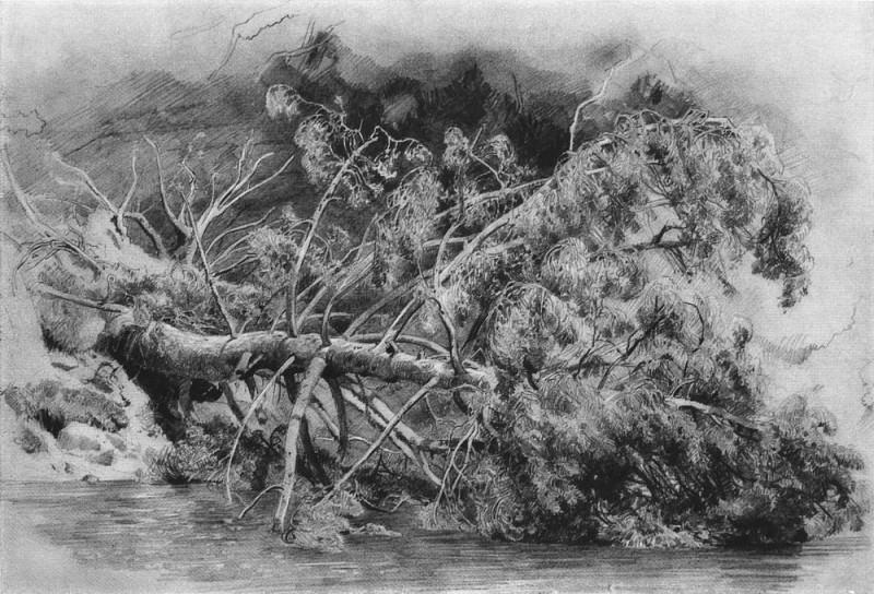 Fallen tree. Siverskaya 1879 29h43. Ivan Ivanovich Shishkin