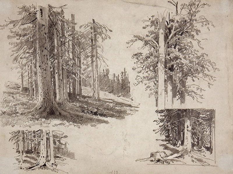Etudes trees. 1880, 24, 3x32, 2. Ivan Ivanovich Shishkin