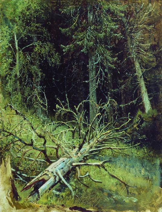In the fir forest 1870 34h27. Ivan Ivanovich Shishkin