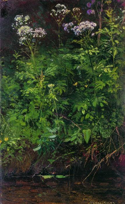 Полевые цветы у воды. Этюд 1889-1890 22. 4х14. 2. Иван Иванович Шишкин
