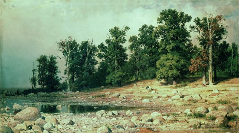 Coast Peter groves in Sestroretsk 1886 92h169. Ivan Ivanovich Shishkin