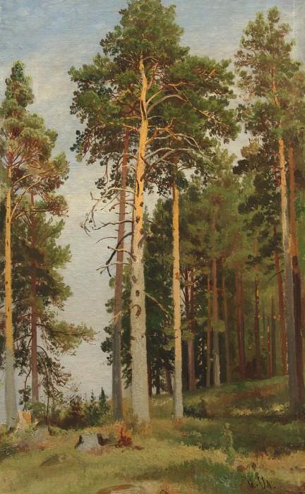 Pine sunlit. Ivan Ivanovich Shishkin