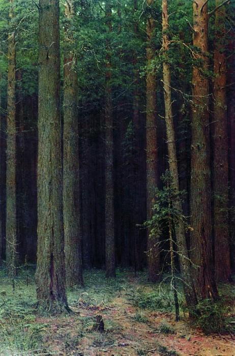 Conservation. Pinery 1881 143h93. Ivan Ivanovich Shishkin