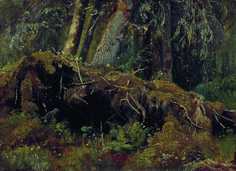 deadfall 1880 Oil on board 26. 3h36. 1. Ivan Ivanovich Shishkin