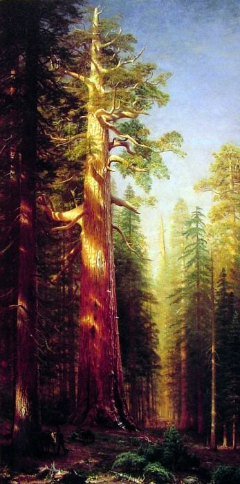 The Great Trees. Albert Bierstadt