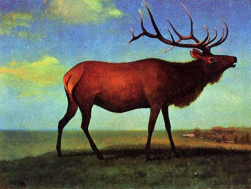Elk. Albert Bierstadt