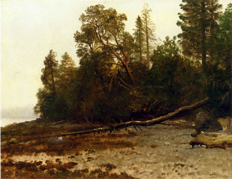 Bierstadt Albert The Fallen Tree. Albert Bierstadt
