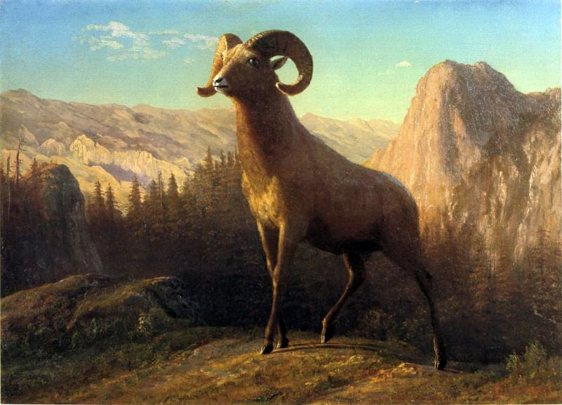 Bierstadt Albert A Rocky Mountain Sheep Ovis Montana. Albert Bierstadt