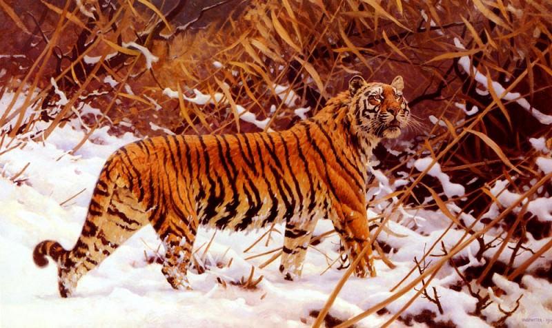 Ungewitter Hugo Siberischer Tiger In Einer Schneelandschaft. Немецкие художники