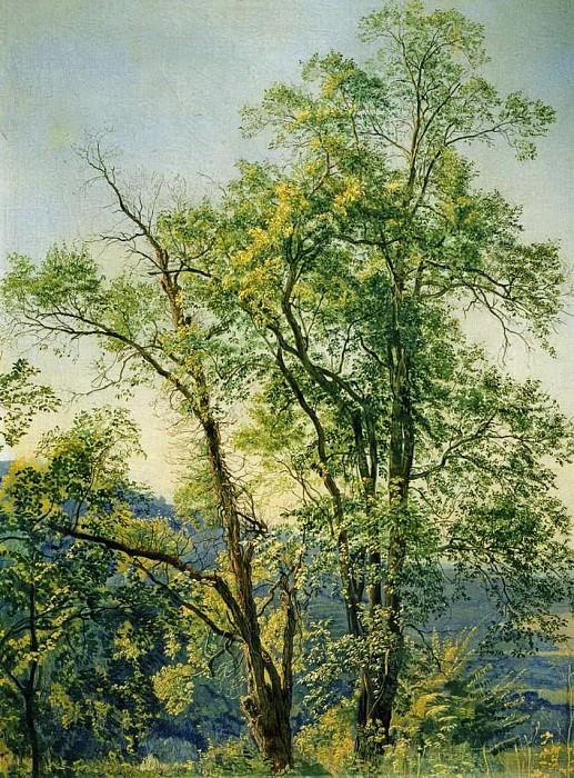 Оливковое дерево. Долина Ариччи. 1842. Alexander Ivanov