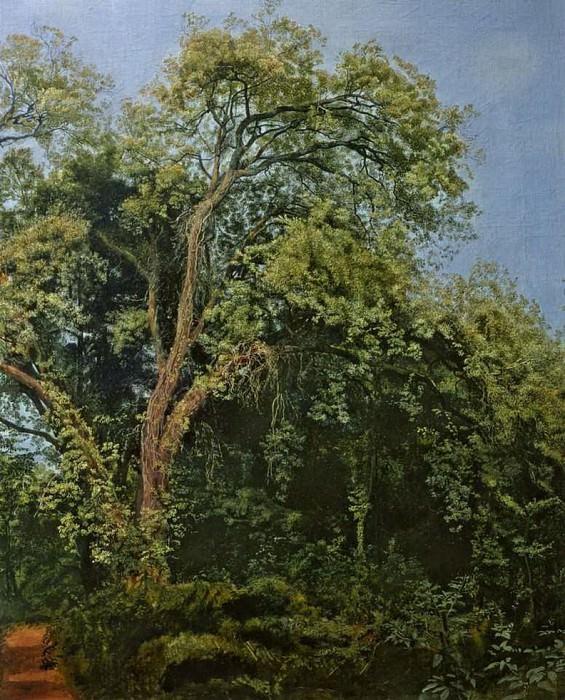 Дерево в парке Киджи. Alexander Ivanov