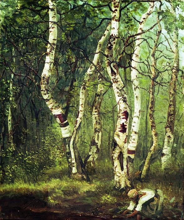 Старые березы. 1880-е. Efim Volkov