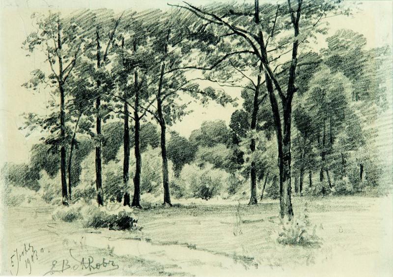 Лес. 1903. Efim Volkov
