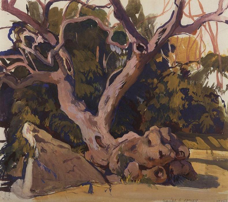 Деревья в Крыму. Зинаида Евгеньевна Серебрякова