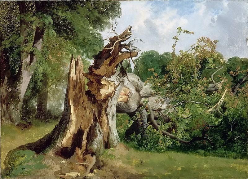 Калам, Александр (1810-1864) -- Сломанное дерево. Part 5 Louvre