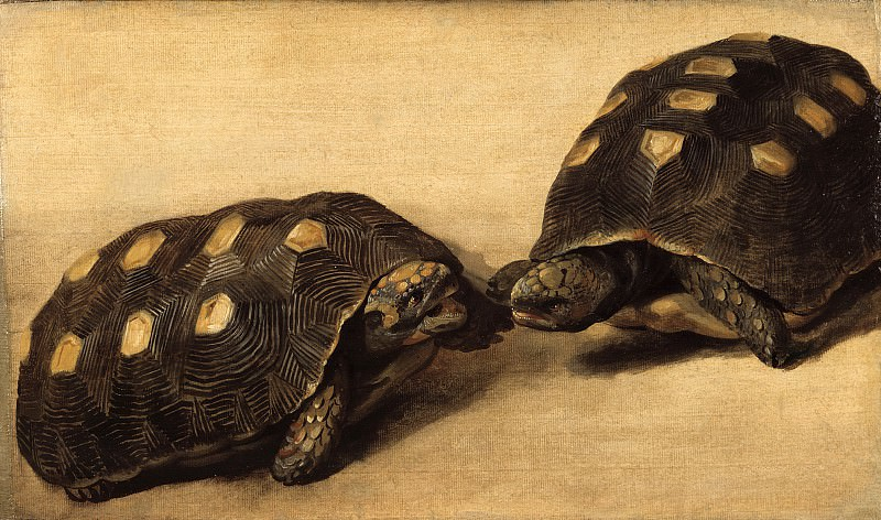 Albert Eckhout - Study of Two Brazilian Tortoises. Mauritshuis