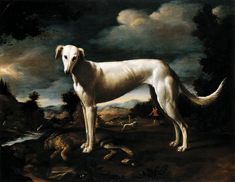 Baccio del Bianco Portrait of a Greyhound 16178 203. European art; part 1