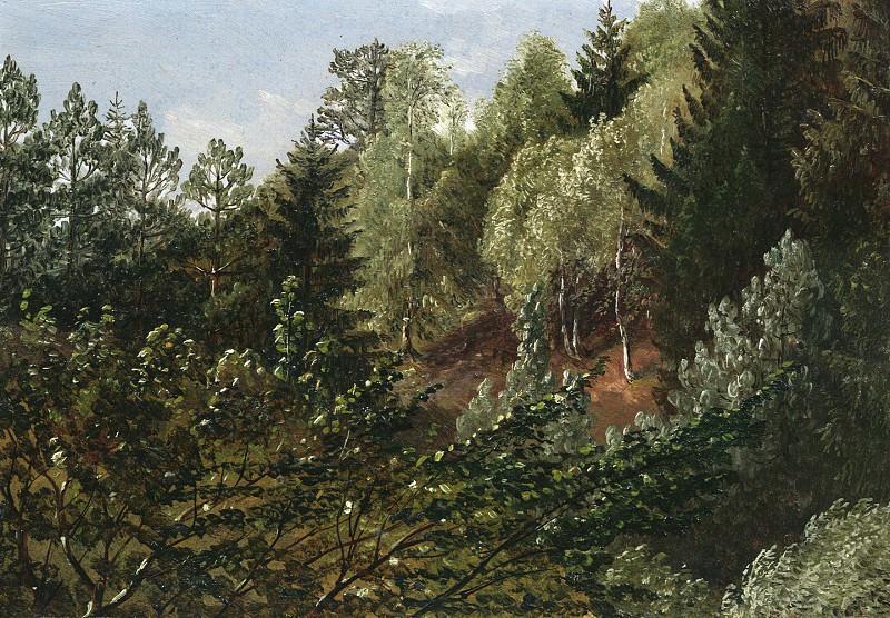 Карл Густав Карус Поросший лесом холм над Эльбой весной. Европейская живопись; часть 1