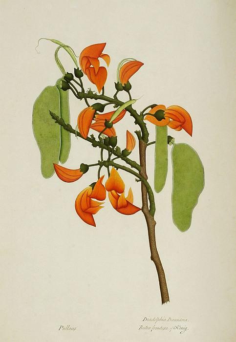 Butea monosperma 13050 172. Европейская живопись; часть 1