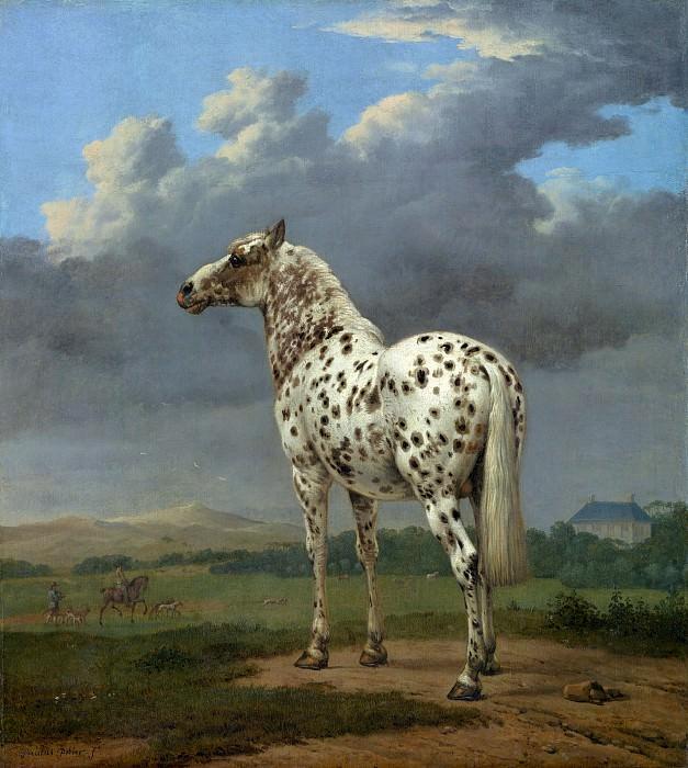 Поттер Пауль Питерс (1625 Энкхейзен - 1654 Амстердам) - Пегая лошадь (49х45 см) 1650-54. J. Paul Getty Museum