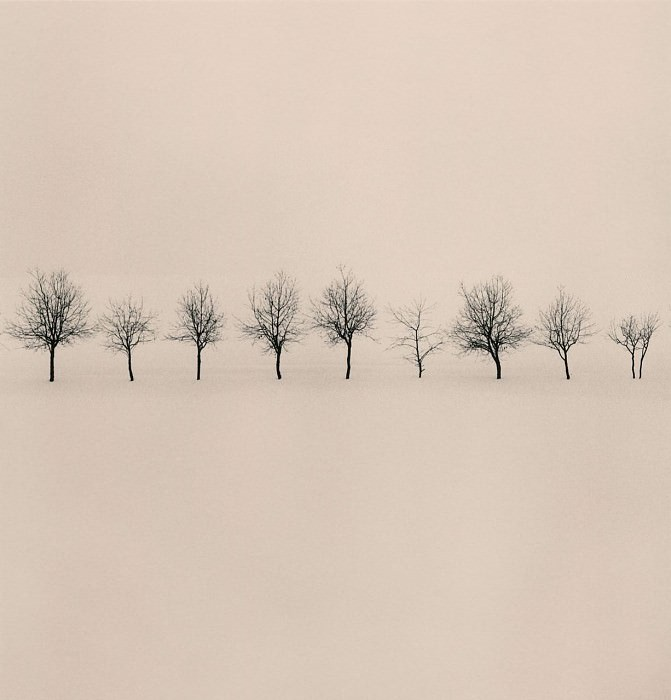 Michael Kenna Nine Trees Higashikawa Hokkaido Japan 2004 40646 184. часть 4 -- European art Европейская живопись