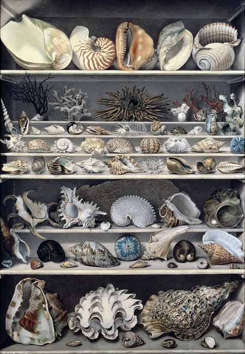 Vicomte de Barde Leroy -- Selection of shells. Part 2 Louvre