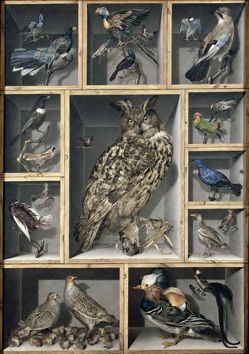 Vicomte de Barde Leroy -- Birds. Part 2 Louvre