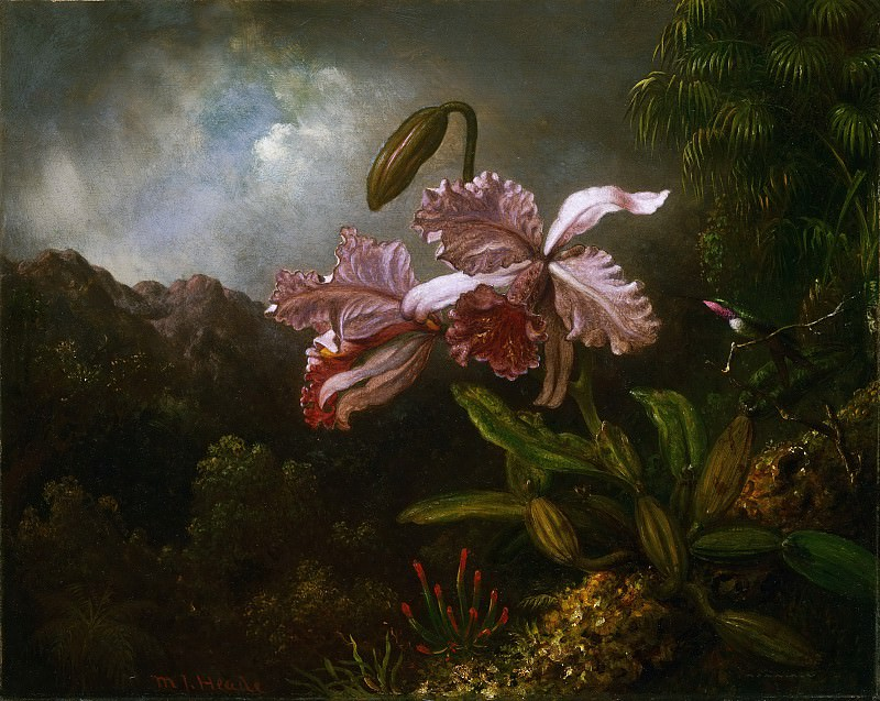 Martin Johnson Heade, American, 1819-1904 -- Orchids in a Jungle. Philadelphia Museum of Art